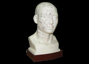 מודל ראש לדיקור